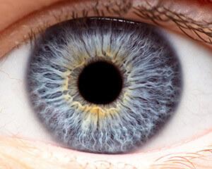 Closeup of a Cornea